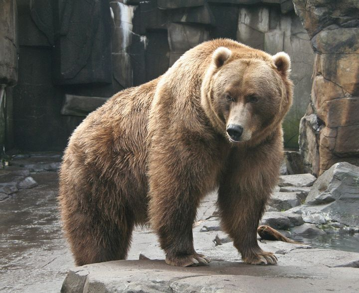 Dreams About Bears Dream Meanings Explained Huffpost