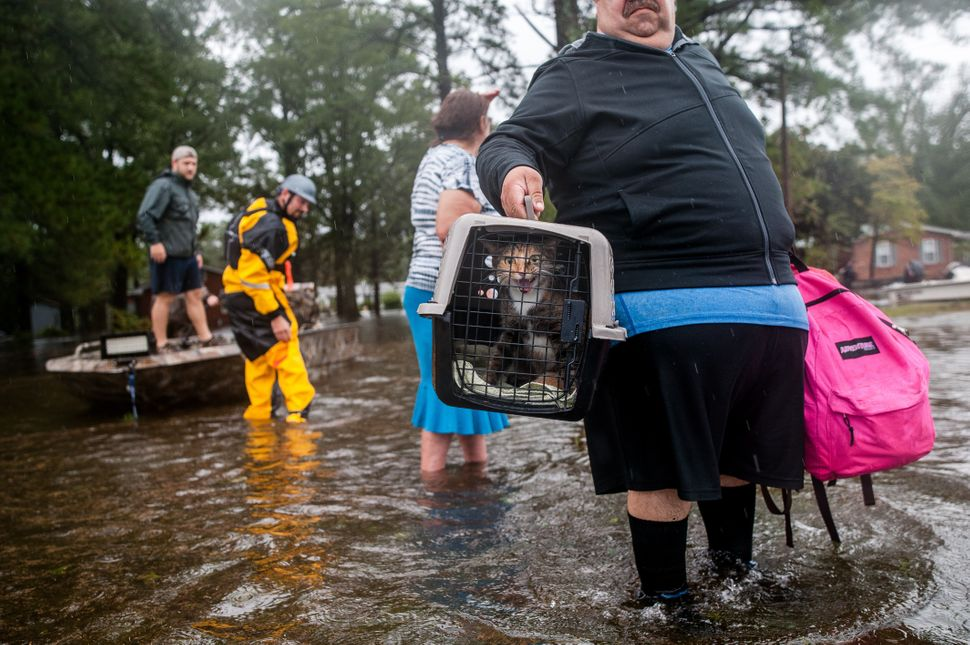 Orlando Collazo holds a pet carrier with his family's cats, Princess and Gizmo, after they were pulled from their flooded hom