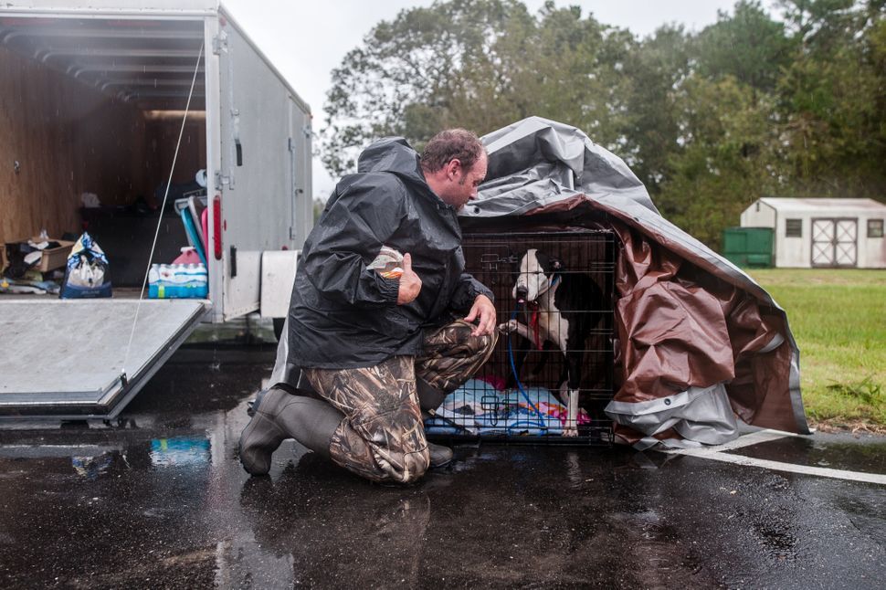 Scott brings food to a dog he rescued from the flooded streets of Lumberton on Sunday.