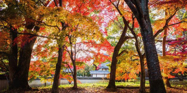 this photo was taken at Seiryou-ji temple, Kyoto. sunlight is coming through the leaves of autumn foliage.