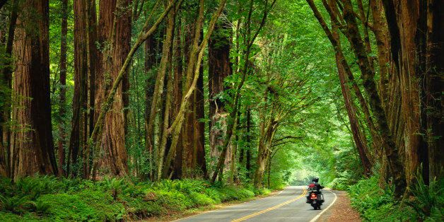 Motorcycle travelling through the redwood trees on the Avenue of the Giants in Humboldt Redwoods State Park.