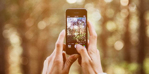 Cropped image of woman photographing trees through smart phone in forest