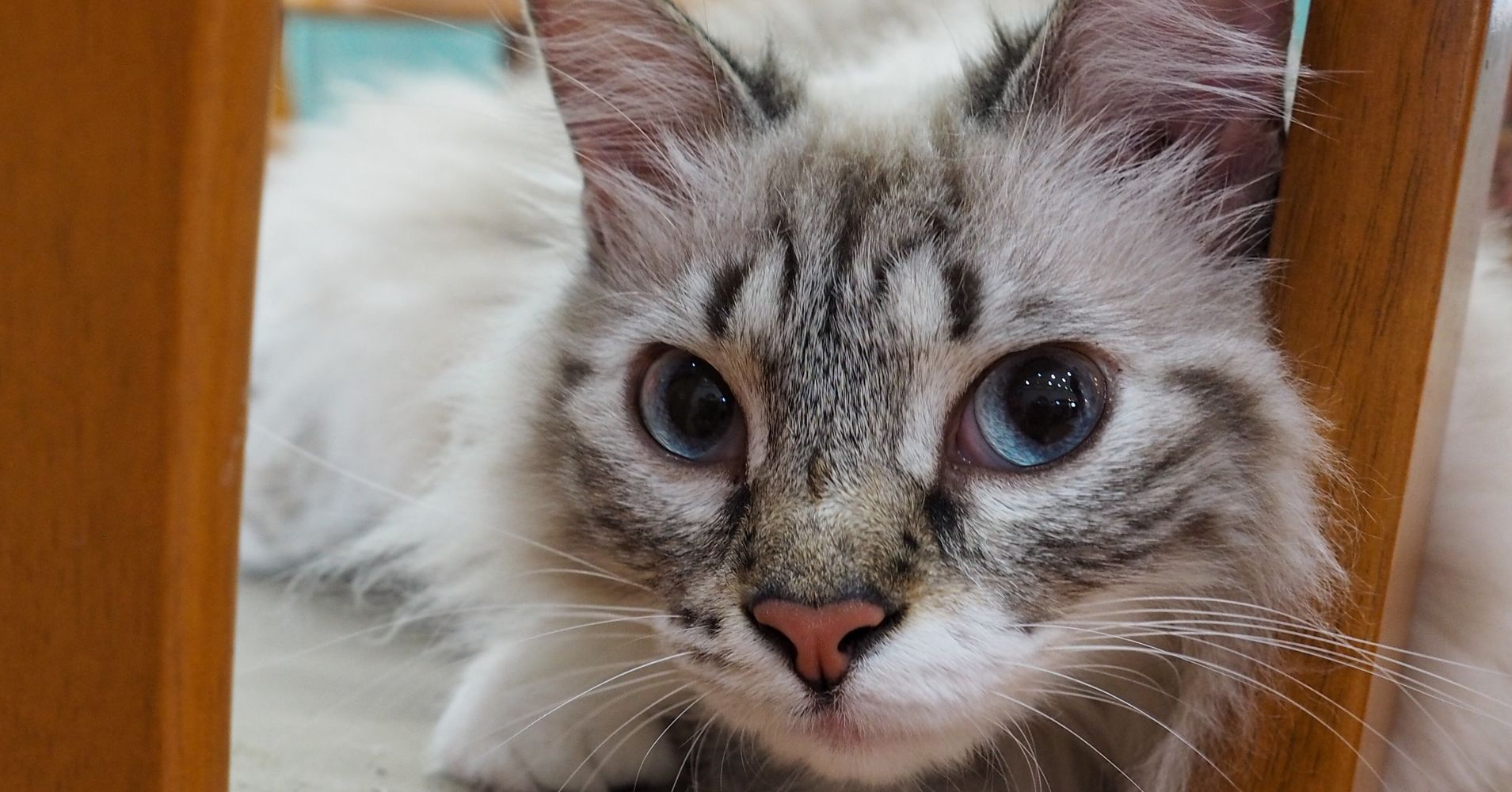 Cat Doesn't Get The Cream, But Does Get A Bag Full Of Narcotics | HuffPost