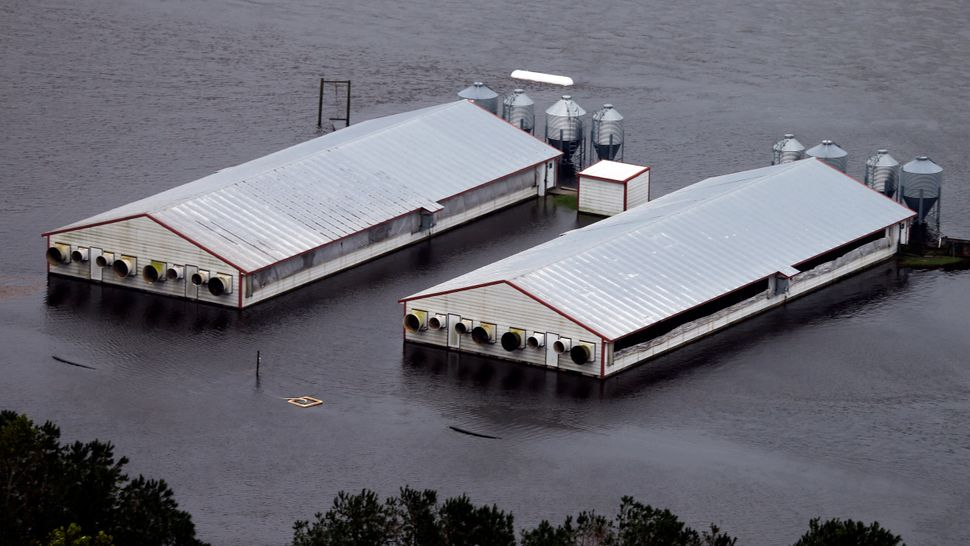 A hog farm near Trenton, North Carolina.