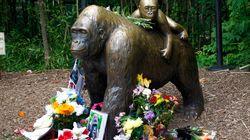 2년 전, 고릴라 하람베는 동물원에서 10분만에