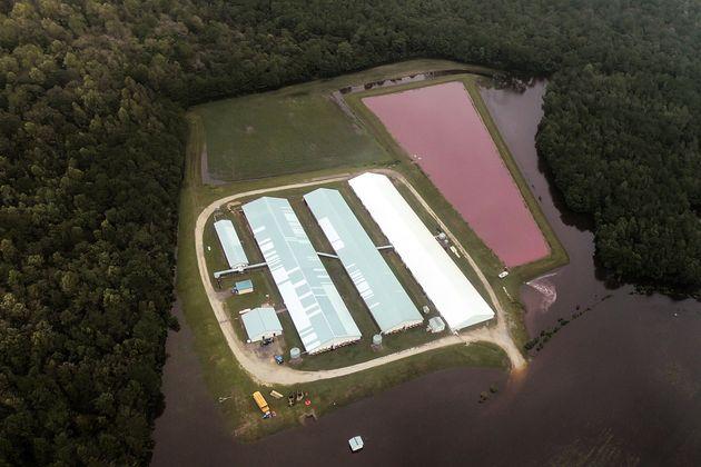 Ο απίστευτος λόγος που ξαφνικά δημιουργήθηκαν δεκάδες ροζ λίμνες στις