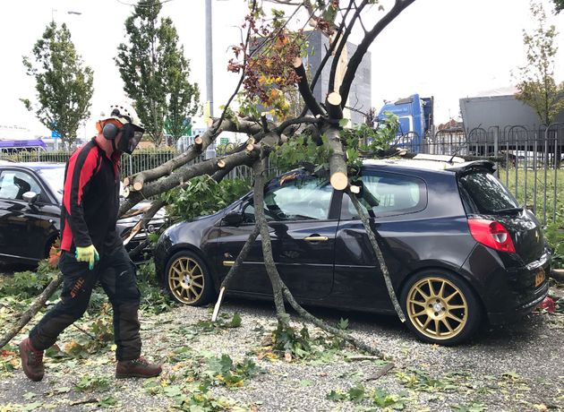 A car crushed by a tree in