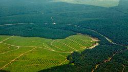 Greenpeace épingle les multinationales qui contribuent à la déforestation en se fournissant en huile de
