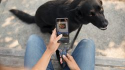 Umgang mit dem Hund: Tierarzt warnt Halter vor dieser