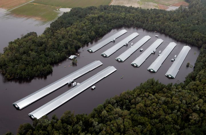 Chicken farm buildings are inundated with floodwater from Hurricane Florence near Trenton, North Carolina, Sunday, Sept. 16,
