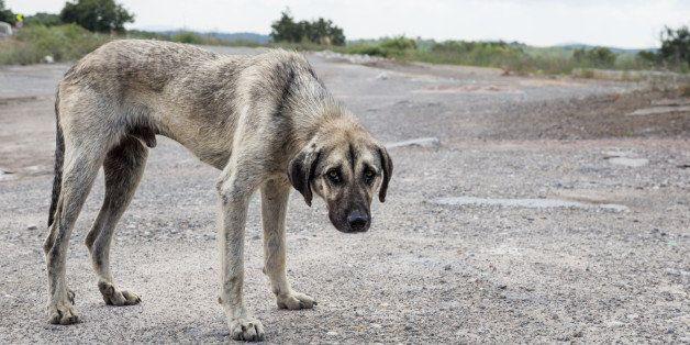 slim and hungry street dog