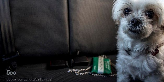 Cop Makes Woman Sit In Hot Car To See How Her Dog Felt