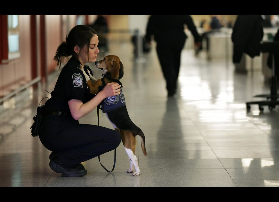 In this Feb. 9, 2012 photo, Meghan Caffery, a U.S. Customs and Border Protection Agriculture Specialist, hugs Izzy, an agricu