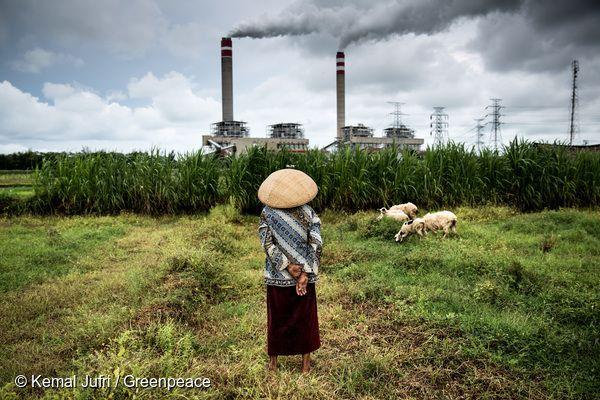 인도네시아의 한 석탄 발전소 앞에서 양치기가 양들을 돌보고