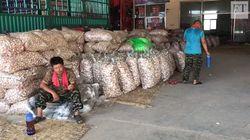 중국의 '불법 깐마늘'은 어떻게