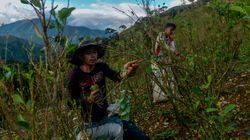 La Colombie reste le premier producteur de cocaïne du