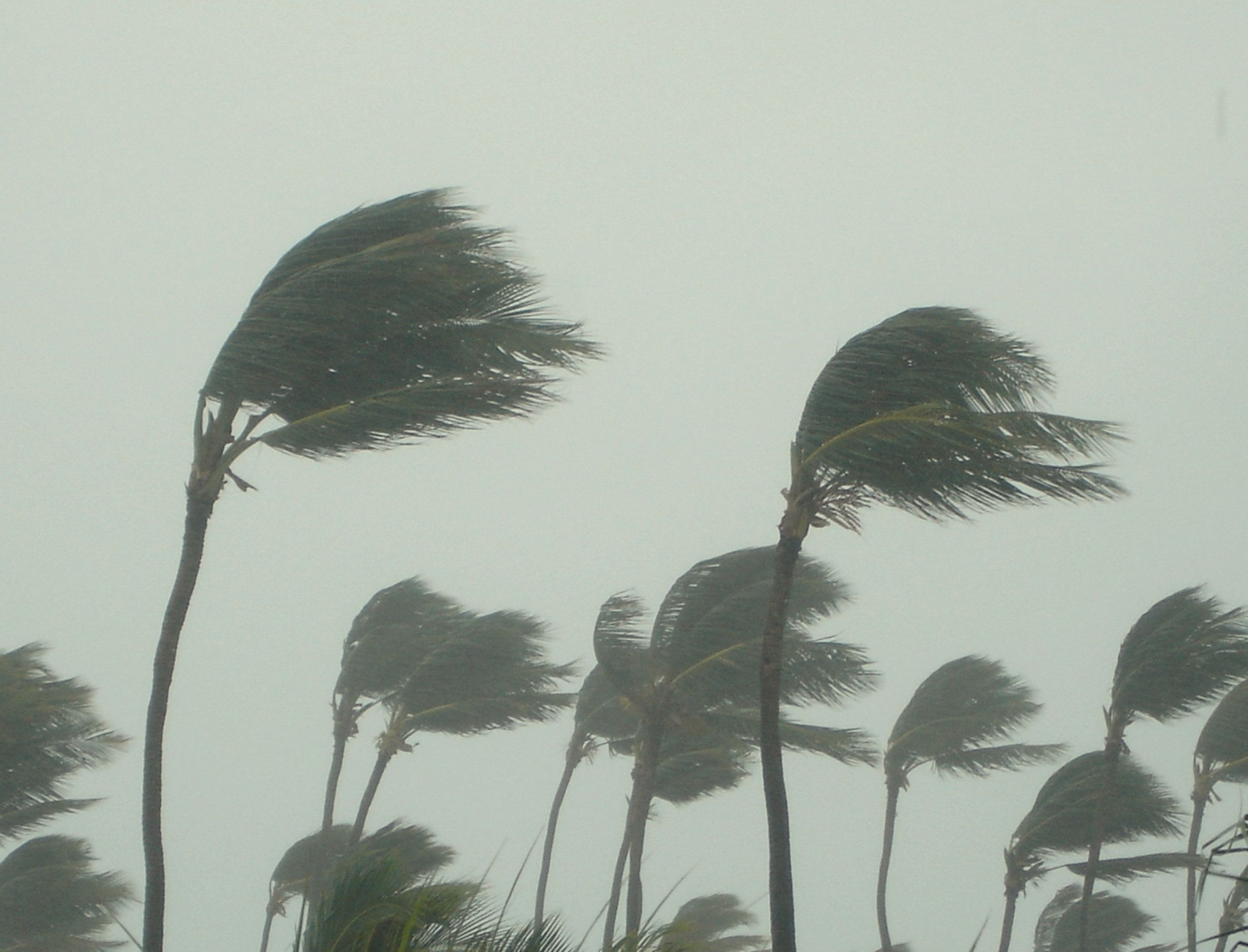 Non, la Tunisie ne sera pas touchée par un cyclone tropical selon