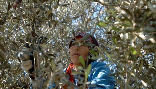 La femme tunisienne, en plein coeur de la production d'huile