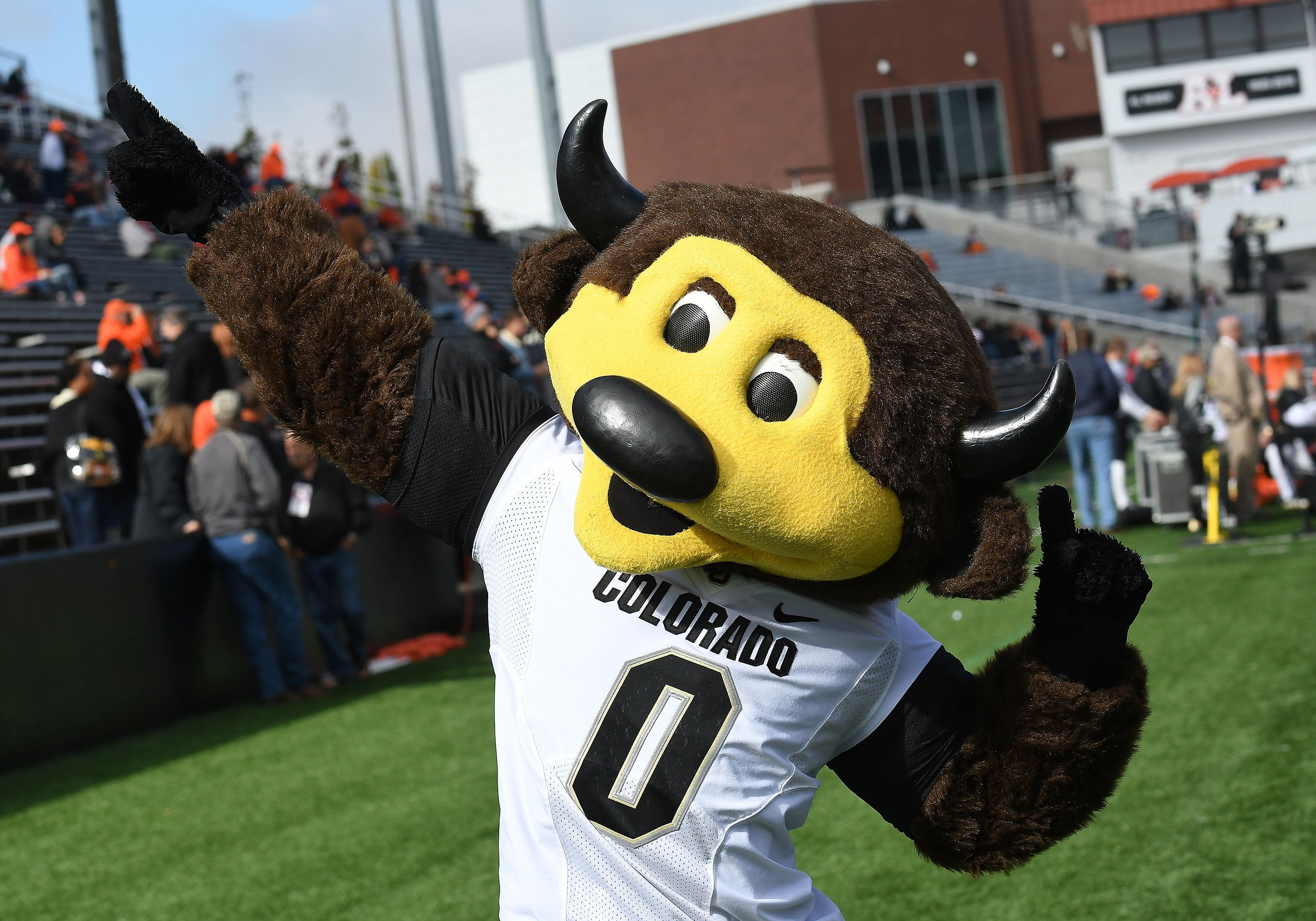 CORVALLIS, OR - OCTOBER 14: The Colorado Buffaloes mascot, Chip, performs on the sideline during a college football game between the Colorado Buffaloes and Oregon State Beavers on October 14, 2017 at Reser Stadium in Corvallis, Oregon. (Photo by Brian Murphy/Icon Sportswire via Getty Images)
