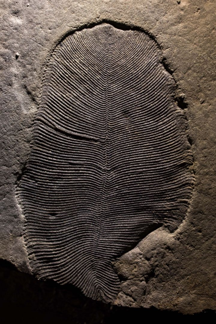 Scientists Identify The Earth's Oldest Known Animal Fossil