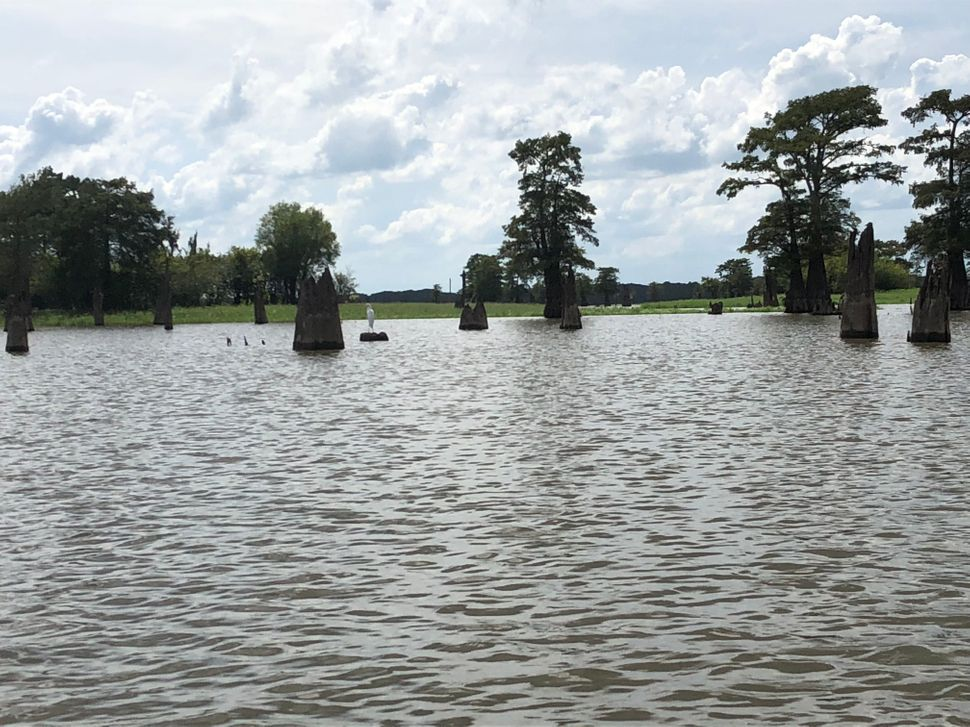 The Atchafalaya Basin is the largest wetland in the United States.