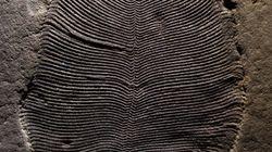 지구에서 가장 오래된 동물 화석의 정체가