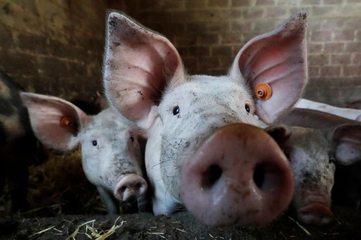 The World Health Organization has called for an end to the use of antibiotics in healthy animals.