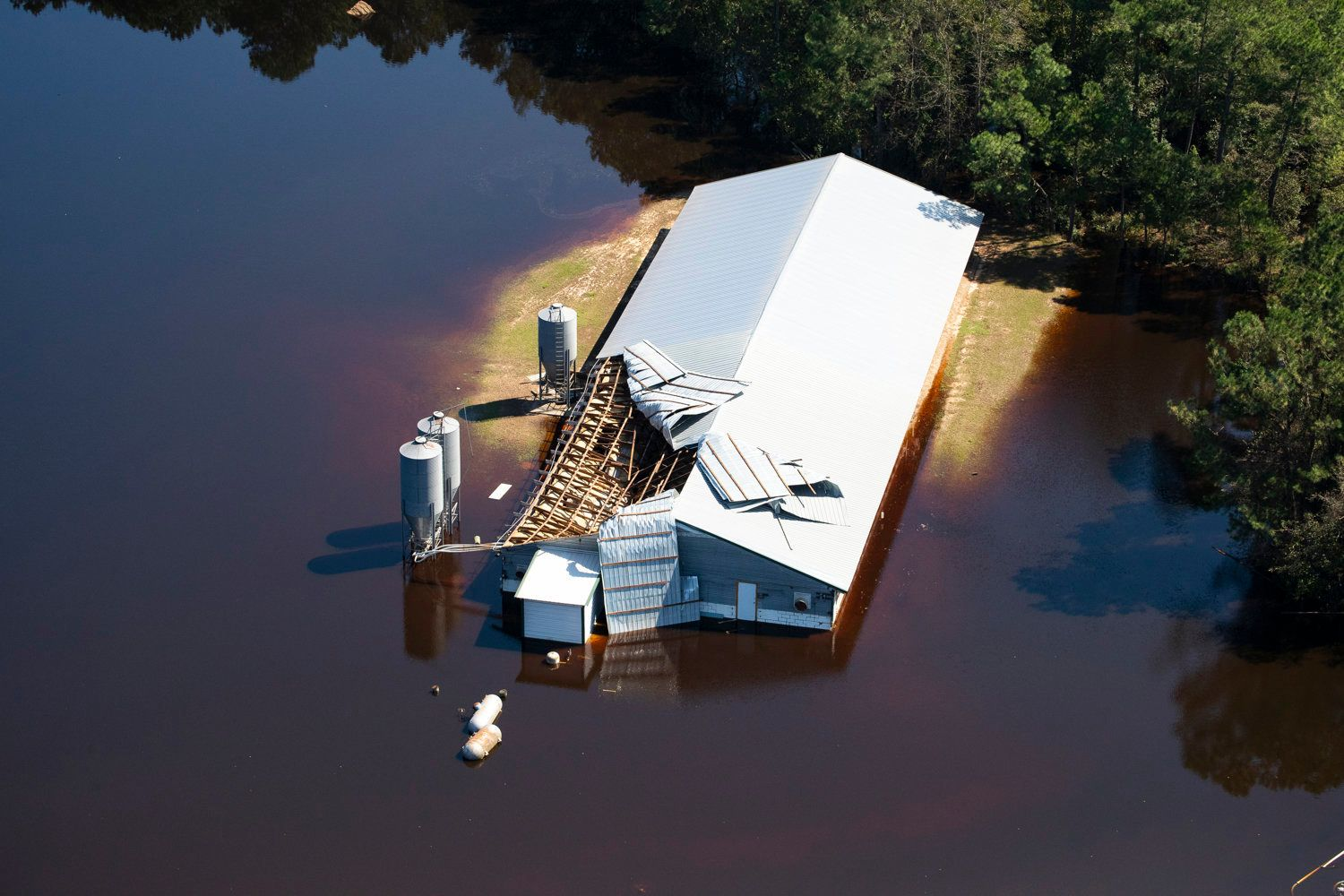 A damaged structure on a hog farm surrounded by flood waters in White Oak, North Carolina after Hurricane Florence battered the area.  Florence began as a disturbance but it gained strength and crossed the threshold from tropical storm to hurricane in a matter of days. Later, it became a fearsome Category 4 hurricane with winds of 130 mph. Although Florence made landfall near Wrightsville, North Carolina,  slowed down, it caused heavy rainfall and devastating flooding.   The storm flooded the state shutting down power plants, breaching coal ash ponds and flooding hog and chicken farms causing extensive environmental damage.