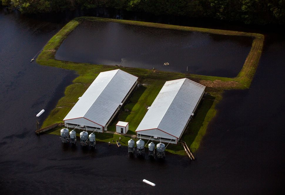 This Sept. 17, 2018, photo shows flood waters from Hurricane Florence surround two hog houses and its lagoon near Kinston, No