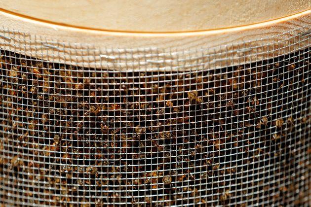 Βρετανία: Βρέθηκαν 60.000 μέλισσες σε οροφή