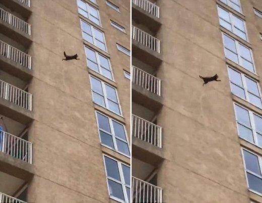 고층 건물서 추락한 너구리는 다행히 죽지