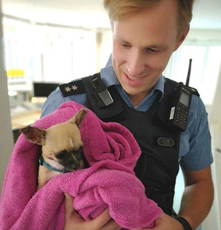 Hessen: Frau entdeckt verletzten Hund – Tierquäler will ihn nicht