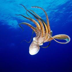 PETA Blasts 'Nonsense' Octopus Ecstasy