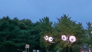 서울에 초대형 눈을 단 은행나무가 등장한