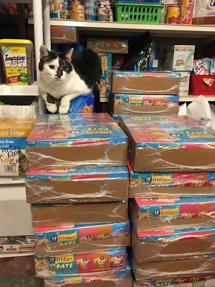 A Safe Haven cat shows off even more donations to the facility.