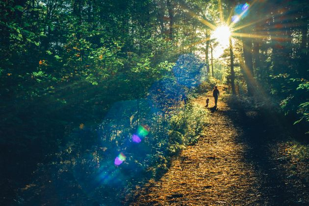 Why A Weekend Spent Enjoying The Japanese Art Of Forest Bathing Can Soothe Your Stress