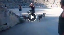 Βίντεο: Αγέλη αδέσποτων σκυλιών στο αρχαίο θέατρο της