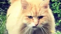 Stolen Norwegian Forest Cat Mr Muk Reunited With Owner Two Months