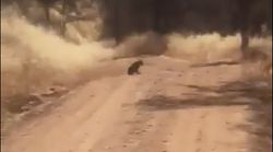Hund stellt sich Auto in den Weg – als der Fahrer aussteigt, hört er einen