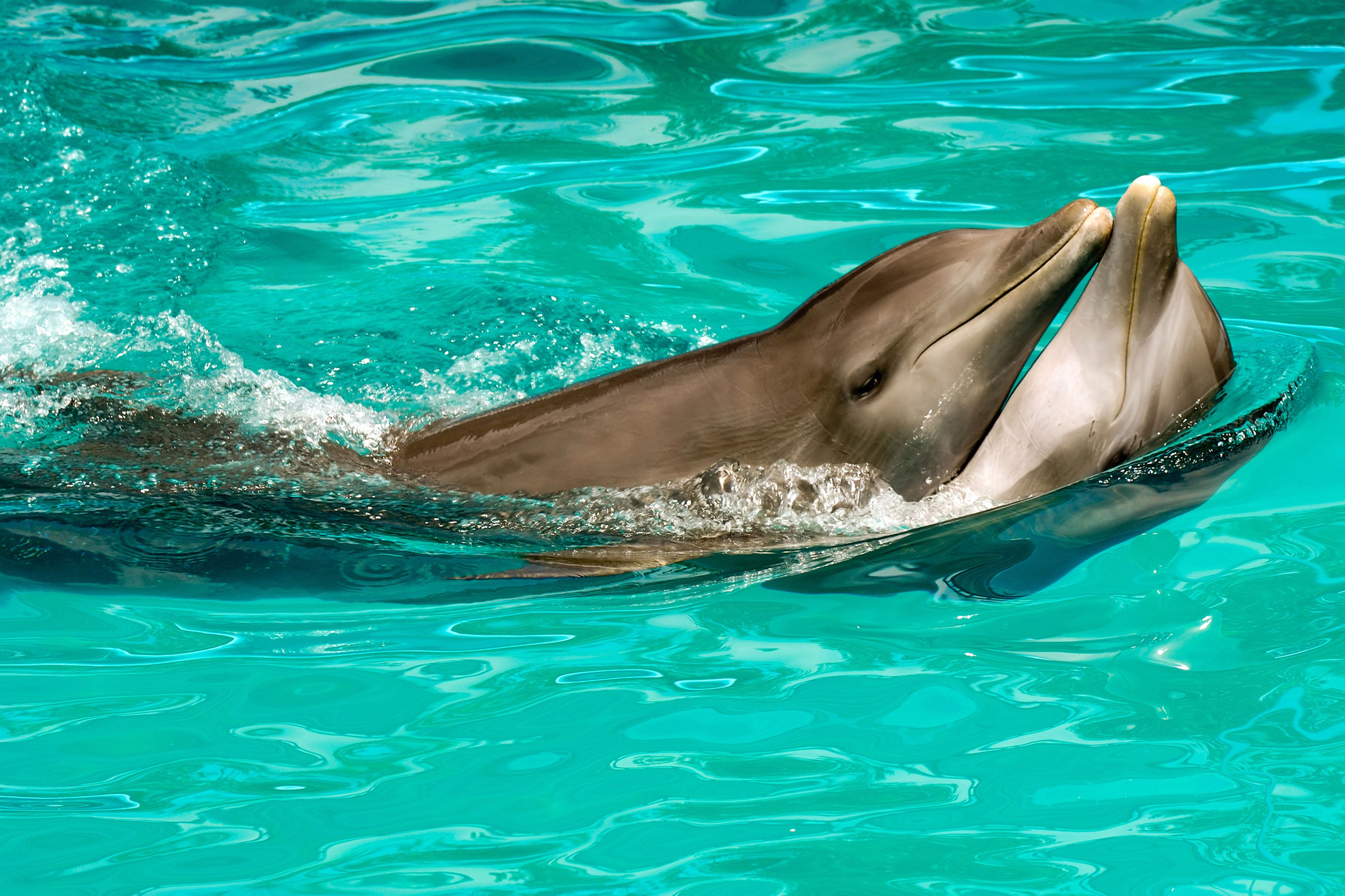 Dolphins have sex for pleasure pics 71