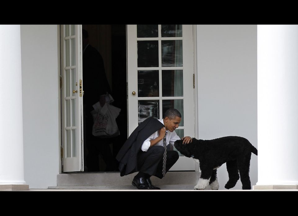 """Clearly, Obama and his """"Portuguese"""" water dog are co-conspirators in lying about where they're from."""