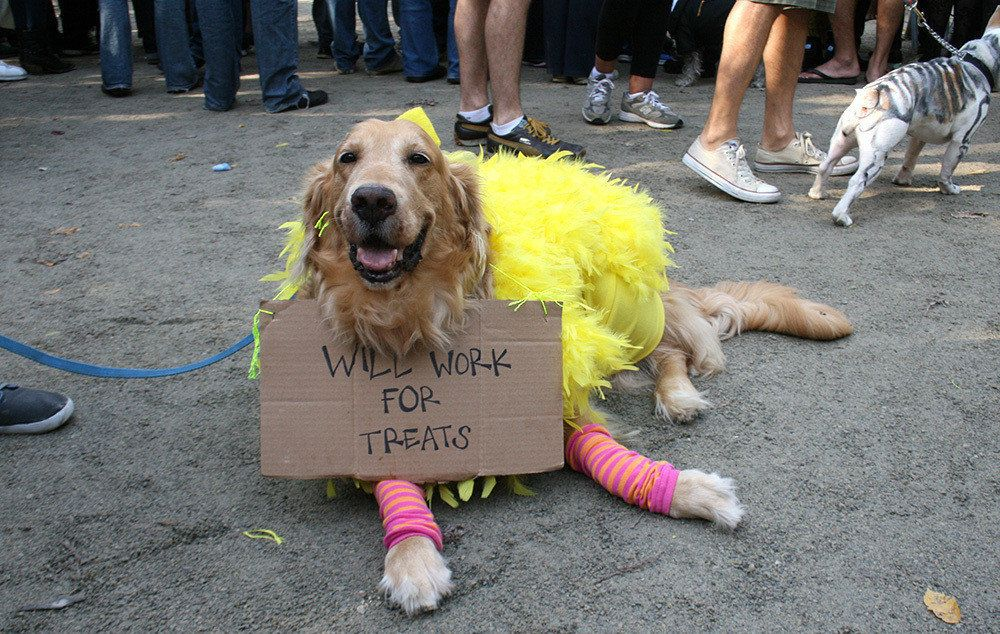The Funniest Pet Halloween Costumes Submit Your Own