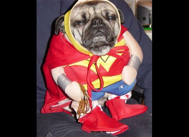 "Pugs just take this costumed pet thing to a whole new level, don't they? (Via <a href=""http://clarathecool.wordpress.com/"" ta"