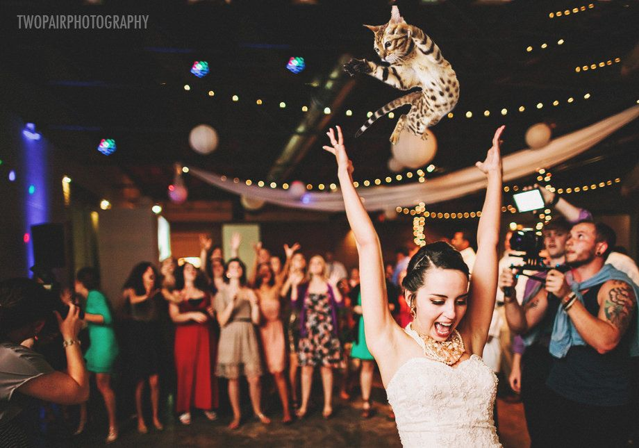 """Bouquets are old and busted. All the hippest brides are <a href=""""http://bridesthrowingcats.com/"""" target=""""_blank"""">throwing cat"""