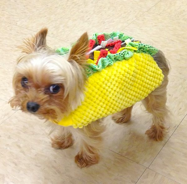 "<a href=""http://instagram.com/tinycharlie123"" target=""_blank"">Tiny Charlie </a>dressed up as a mini taco."