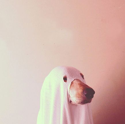 "<a href=""http://instagram.com/irisrucel"" target=""_blank"">This is a ghost dog</a>."