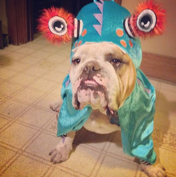 "<a href=""http://instagram.com/p/fc3SJix9FR/"" target=""_blank"">This bulldog makes one handsome monster</a>."