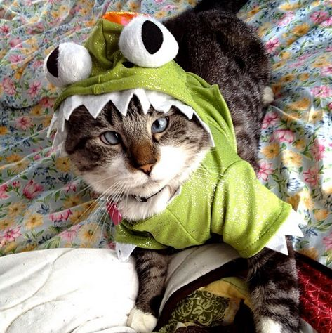 "<a href=""http://instagram.com/spangles09"" target=""_blank"">Spangles the cross-eyed cat</a> dresses up as a toothy dino."