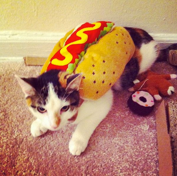 "<a href=""http://instagram.com/timeisalliownxx"" target=""_blank"">This is a hot dog cat</a>."