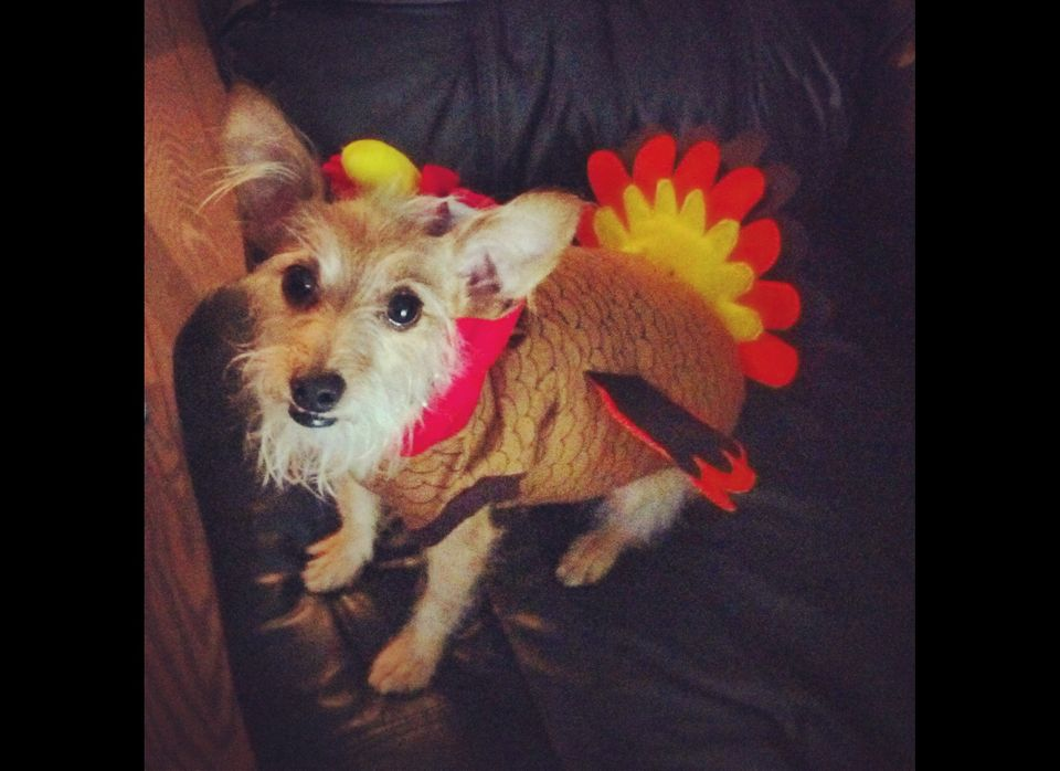 Thrash is ready for Halloween and Thanksgiving